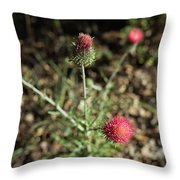 Red Thistle Morning Sunlight Throw Pillow
