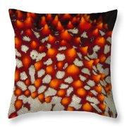 Red Thorns Of A Sea Star, Pentaceraster Throw Pillow
