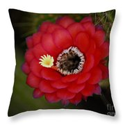 Red Torch Cactus-echinopsis  Throw Pillow