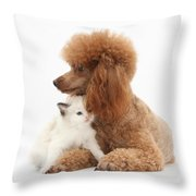 Red Toy Poodle And Kitten Throw Pillow