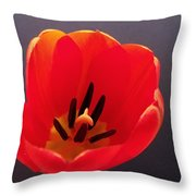 Red Tulip 4 Throw Pillow