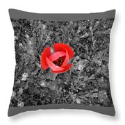 Red Tulip From Above Throw Pillow
