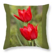 Red Tulips In A Meadow Closeup Sunny Spring Day Throw Pillow
