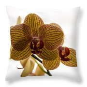 Red Veined Orchid Throw Pillow