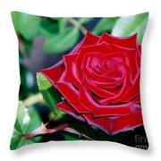 Red Velvet Rose Throw Pillow