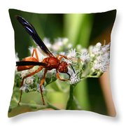 Red Wasp On Lace Throw Pillow