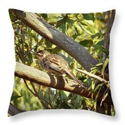 Red Wattlebird Australia Throw Pillow