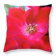 Red White Rose Throw Pillow