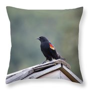 Male Red Wing Black Bird Throw Pillow