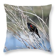 Red Winged Black Bird At Chatfield Throw Pillow