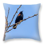 Red Winged Blackbird 2 Throw Pillow