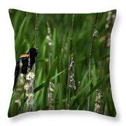 Red-winged Blackbird Calling Throw Pillow