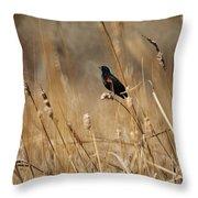 Red Winged Blackbird Throw Pillow by Ernie Echols