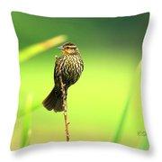 Red Winged Blackbird Female Throw Pillow