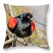 Red-winged Blackbird Foraging Throw Pillow