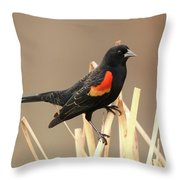 Red Winged Blackbird I I Throw Pillow