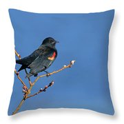 Red-winged Blackbird On Blue Throw Pillow