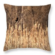 Red Winged Blackbird On Cattails Throw Pillow