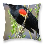 Red-winged Perch Throw Pillow