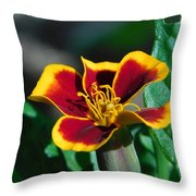 Red/yellow Side View 4-24-16 Throw Pillow