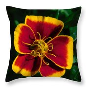 Red/yellow Flower 4-24-16 Throw Pillow