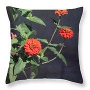 Red Zinnia Flowers Throw Pillow