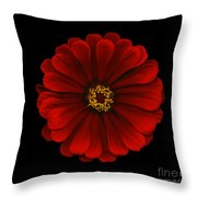 Red Zinnia Throw Pillow