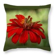 Red Zinnia Throw Pillow