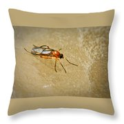 Redfly With Black Eyes Throw Pillow