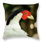 Redheaded Bird Portrait. Throw Pillow