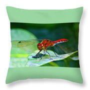 Redheaded Dragonfly Throw Pillow