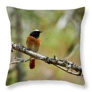 Redstart Throw Pillow