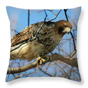 Redtail Among Branches Throw Pillow