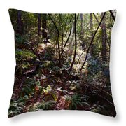 Redwood Forest Filtered Sunlight Throw Pillow by Ben Upham III