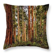 Redwood Forest Landscape Throw Pillow