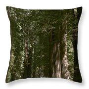 Redwood Highway Throw Pillow