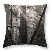 Redwood Mystery Throw Pillow