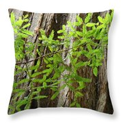 Redwood Tree Art Prints Baslee Troutman Throw Pillow