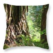 Redwood Tree Art Prints Redwoods Forest Throw Pillow
