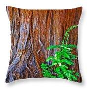 Redwood Tree Trunk At Pilgrim Place In Claremont-california   Throw Pillow