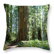 Redwood Trees Forest California Redwoods Baslee Throw Pillow