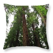 Redwood6 Throw Pillow