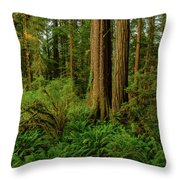 Redwoods And Ferns Throw Pillow