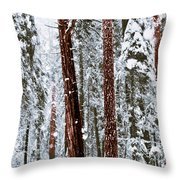 Redwoods In Snow Throw Pillow