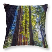 Redwoods Of Muir Woods Throw Pillow