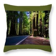 Redwoods Road Throw Pillow