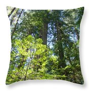 Redwoods Trees Forest Art Prints Baslee Troutman Throw Pillow
