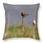 Reed Bunting Singing In Springtime Throw Pillow