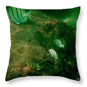 Reef Life Off Hawaii Throw Pillow
