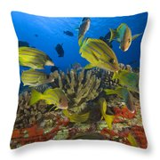 Reef Scene Throw Pillow by Dave Fleetham - Printscapes